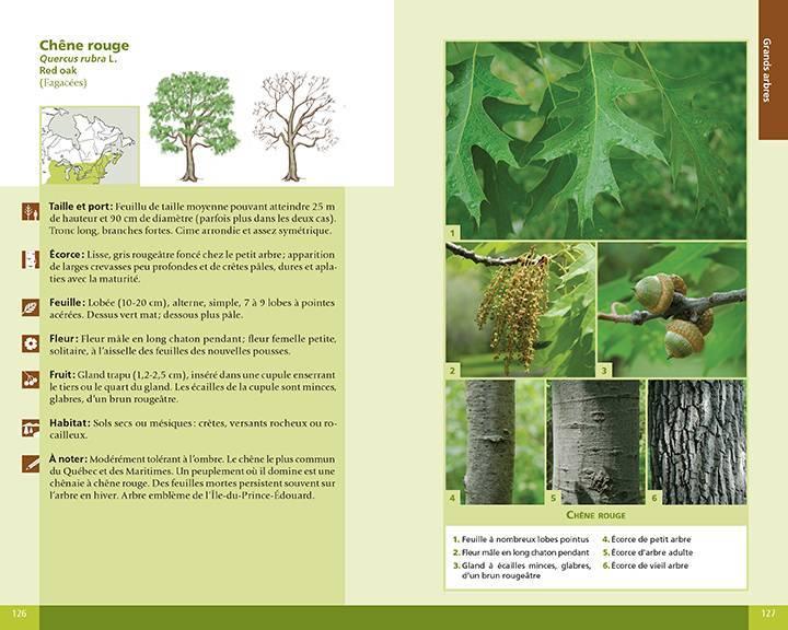 arbres et plantes foresti res r dition souple du qu bec et des maritimes ditions michel. Black Bedroom Furniture Sets. Home Design Ideas